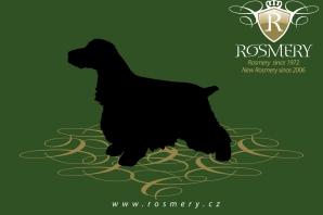 rosmery-visual-identity